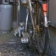 猫も興味津津